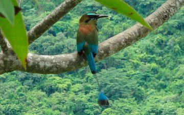 Birdwatching Pasur